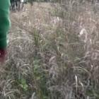 Farheen HaQ, still from Homing, video, 2008.