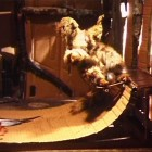Anissi Kasitonni, video still from Liitäjät (Gliders), 2005