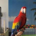 Davida Nemeroff, <em>Parrot</em>, 16×21″, 2010