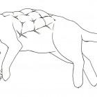 Jean-Paul Kelly, Cat (Mom), ink drawing, 2007