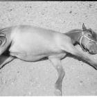 Jamie Campbell, <em>Pony (please wake up),</em> 2011