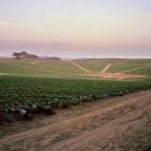 Nathan Cyprys, Strawberry Field, Watsonville, California, 2012