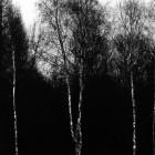 Daniel Ehrenworth, Untitled – from the series Holocaust Dream, 2002